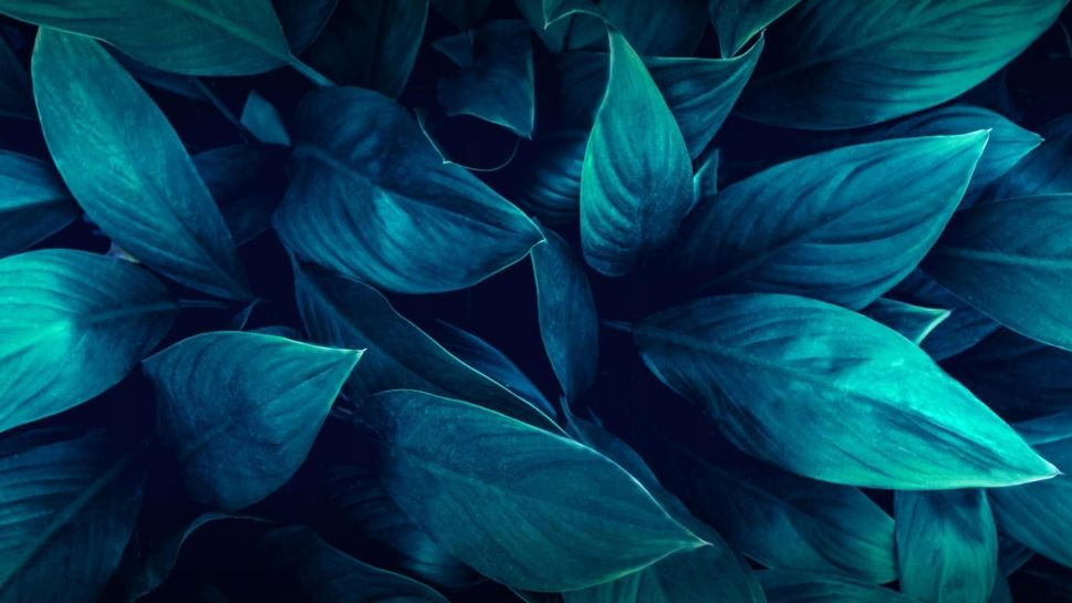green | leaves | plants | nature